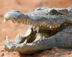 Ferme aux crocodiles-50kms