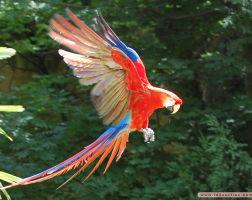 Le Jardin aux oiseaux – 45Kms